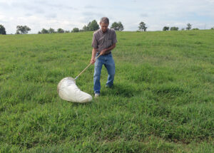 using a sweep net to scout for armyworms