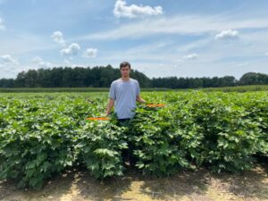 Jackson, Tennessee, research plots