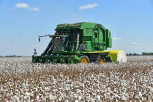 el campo, texas, cotton harvest